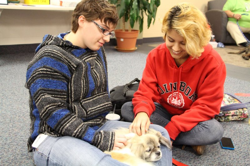 Therapy dogs brighten up students' day by Tracy Geibel